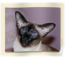 cat calendar image #7 Honey Bunny  Poster