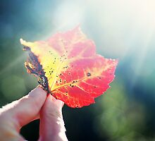 Autumn Flare by photographyjen