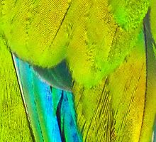 detail of parrot feathers by alicara