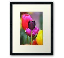 Only The Lonely.. Framed Print