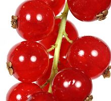 A macro photography of red currants. by Zosimus