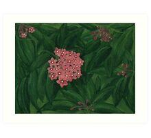Hoya Art Print