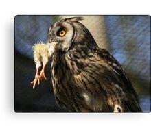 owl versus chicken Canvas Print