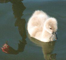Bird Reflections by Michael John
