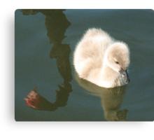 Bird Reflections Canvas Print