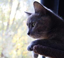 Birdwatching by CitC
