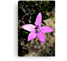 Pink Enamel Orchid, Elythanthera emarginata Canvas Print