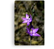 Scented Sun Orchid, Thelymitra macrophylla Canvas Print