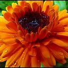 Marigold in Tears by HELUA