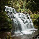 Liffey Falls, Tasmania by Jodi Turner