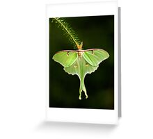 Luna Moth spreads his wings Greeting Card