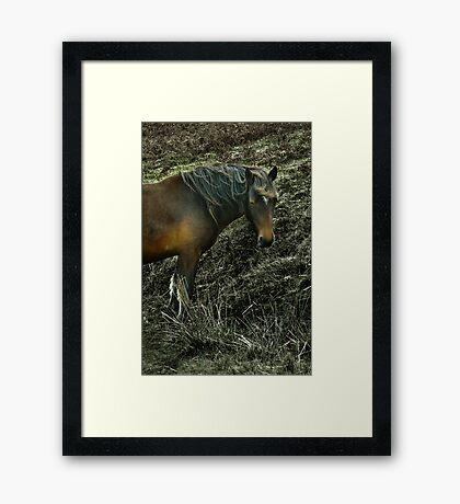 Bodmin Moor Pony Framed Print