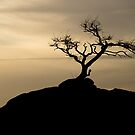 Silhouette by Mark Goodwin