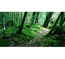 Woodland New Zealand Photographic Print