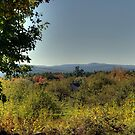 Enjoy the Views by Monica M. Scanlan