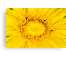 Dandelion Hunt Canvas Print