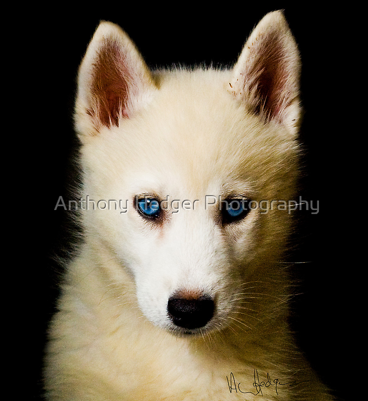 A portrait of Tehya by Anthony Hedger Photography