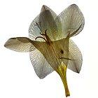 paper petals by elisabeth tainsh