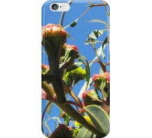 Red Capped Gum about to flower. iPhone Case/Skin