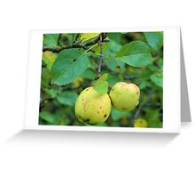 Fruit in the Woods Greeting Card