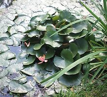 Lily Pad by Rai Applebee Hall