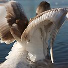 Youngster stretching his wings by gracetalking