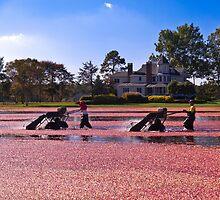 Cranberry Harvest by picturej