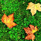 Fall Leaves 2 by Ihosvanny Cordoves