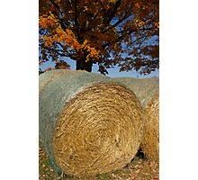 Autumnal Allure Photographic Print
