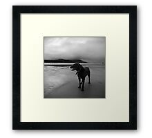 zed the black Framed Print
