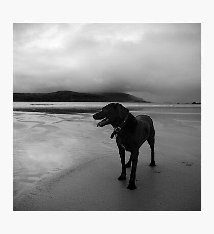 zed the black Photographic Print