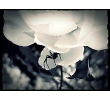 Hidden Photographic Print