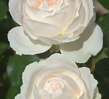 white roses by Nugrahini Tj.