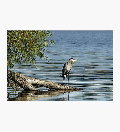 Nice fishing spot... Photographic Print