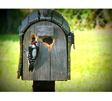 Look Whats Happening To My Mail Box Photographic Print