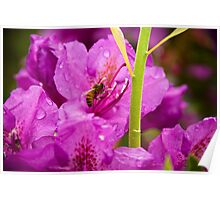 Rhododendrun and Bee Poster