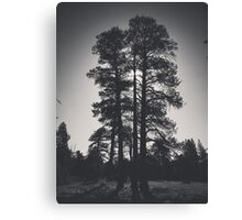 Black and White Ponderosa Pine Canvas Print