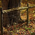 Seasoned Gate by Michael Kelly