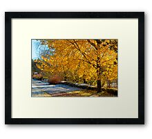 Trembling in the autumn sun Framed Print