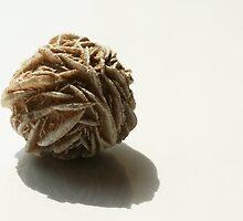 Desert rose by cherryamber
