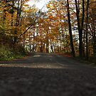 Asphalt Lane by Michael Kelly