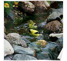 Goldfinch Bathtime Poster