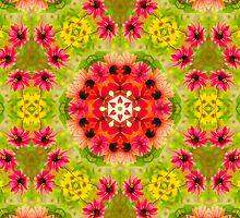 Echinacea garden by scarletariete