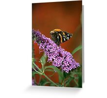 Red Admiral on Butterfly Bush Greeting Card