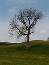 A Keld Tree by WatscapePhoto