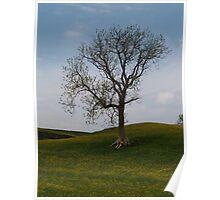 A Keld Tree Poster
