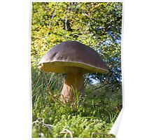 Dinner plate sized toadstool Poster