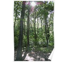 Wooly Woods Summer Poster