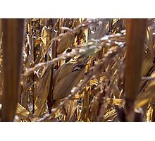 Hidden Fodder Photographic Print