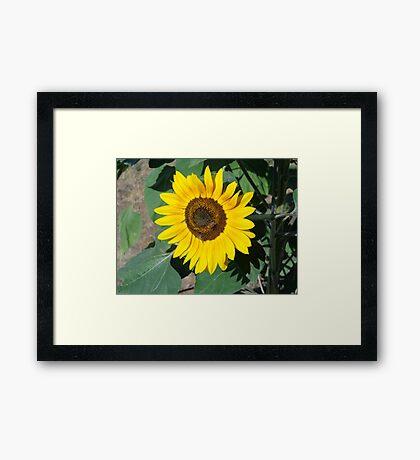 Sunny Bee Framed Print